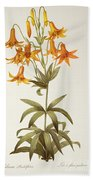 Lilium Penduliflorum Beach Towel by Pierre Joseph Redoute