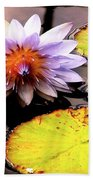 Lillypad In Bloom Beach Towel