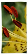 Lily Center Beach Towel by William Selander