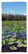 Lily Pond Beach Sheet