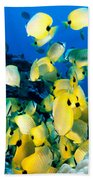 Lined Butterflyfish Beach Towel