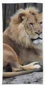 Lion 2 Beach Towel