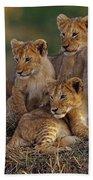 Lion Cubs Beach Towel