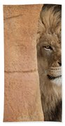 Lion Emerging    Captive Beach Towel