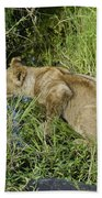 Lion In A Cool Glade Beach Towel