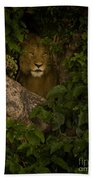 Lion In A Tree-signed Beach Towel