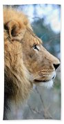 Lion In Thought Beach Towel