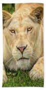Lion Nature Wear Beach Towel