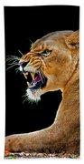 Lion On Black Beach Towel