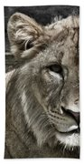 Lion Portrait Beach Towel