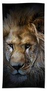 Lion Portraits 0055 Beach Towel