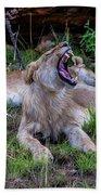 Lion Roar/2 Beach Towel