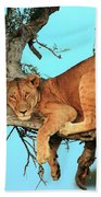 Lioness In Africa Beach Towel