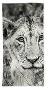 Lioness Portrait Beach Towel