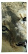 Lioness Up Close Beach Towel