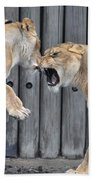 Lioness's Playing 1 Beach Towel