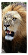 Lions Of The Masai Mara, Kenya Beach Towel