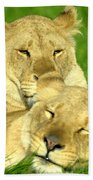Lions Xvii Beach Towel