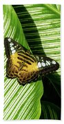Little Butterfly On Big Green Leaves Beach Towel by Bob Slitzan