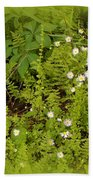 Little Daisy Beach Towel