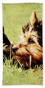 Little Dog Beach Sheet