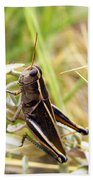 Little Grasshopper 2 Beach Towel