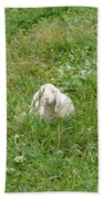 Little Lamb Beach Towel
