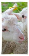 Little Lambs Eat Straw Not Ivy Beach Towel