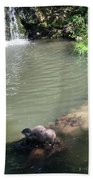 Little Otters At Jersey Zoo Beach Towel