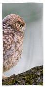 Little Owl Chick Practising Hunting Skills Beach Towel