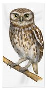 Little Owl Or Minerva's Owl Athene Noctua - Goddess Of Wisdom- Chouette Cheveche- Nationalpark Eifel Beach Towel