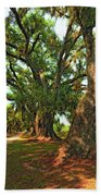 Live Oak Lane Beach Towel by Steve Harrington