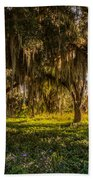 Live Oak Tree Beach Towel