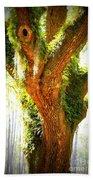 Live Oak With Cypress Beyond Beach Towel