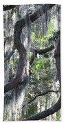 Live Oak With Spanish Moss And Palms Beach Towel