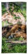 Living In Harmony - Lion Beach Towel