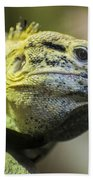 Lizard Beach Towel