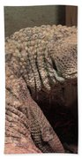 Lizard Beach Towel