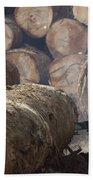 Logger Cutting Tree Trunk, Cameroon Beach Towel