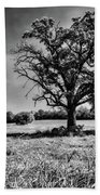 Lone Oak Tree In Black And White Beach Towel