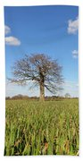 Lone Oak Tree In Wheat Field Beach Towel