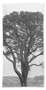 Lone Scots Pine, Crannoch Woods Beach Towel