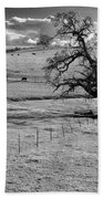 Lone Tree And Cows 2 Beach Towel