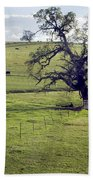 Lone Tree And Cows Beach Towel