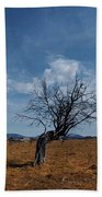 Lonely Dry Tree In A Field Beach Towel