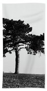 Lonely Pine Beach Towel