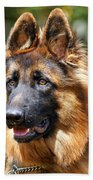 Long Coated German Shepherd Dog Beach Towel