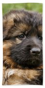 Long Coated Puppy Beach Towel
