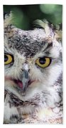 Long Eared Owl In The Trees Beach Towel