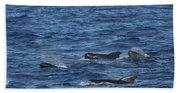 Long-finned Pilot Whales Beach Sheet